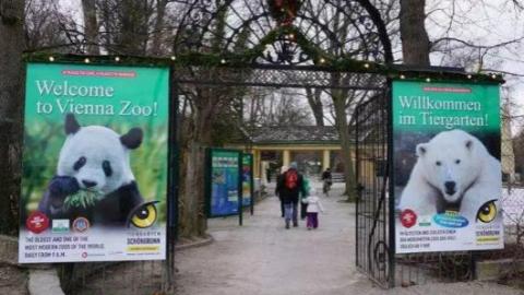 """大熊猫""""园园""""前往奥地利""""出差"""",原因竟然是这个"""