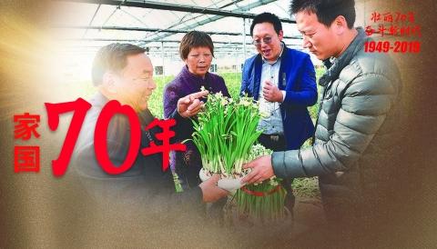 """家国70年丨一家三代与花结缘 """"崇明水仙""""四季绽放传承百年"""