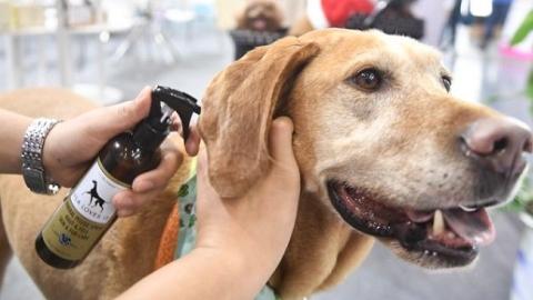 吃营养品、用精油护理 现在的宠物生活越发滋润了