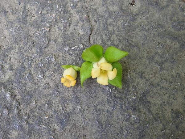 2、柿.JPG