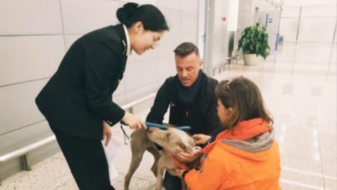 """新政实施首月:214只宠物""""宝贝""""免隔离入境上海"""