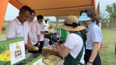2019年上海鲜食玉米文化周开幕 举行品鉴评优活动