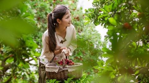 形如水杨子味似梅 杨梅节创造长三角旅游黄金月