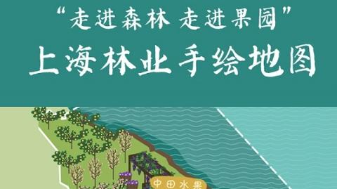 """魔都林业部门喊你""""吃水果""""!首份""""上海森林果园地图""""出炉"""