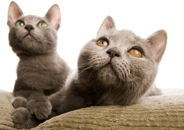 """""""吸猫族""""注意了!被猫抓后出现这些症状可能是猫抓病"""
