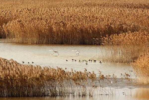 黎军-东滩湿地鸟的乐园-黎军摄.jpg