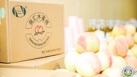 南汇水蜜桃本月中旬起上市:产量略有减少 质量好于往年