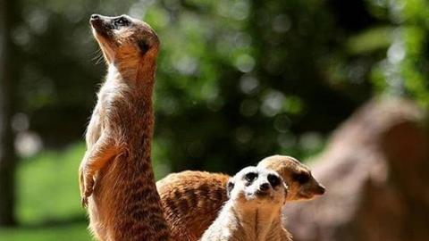 惠游 | 瓦伦西亚生态动物园获选世界十大动物园