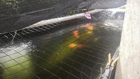 帮侬忙|小天井变身大鱼池,算违法建筑吗?