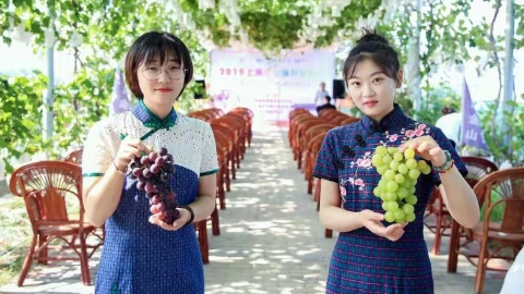金山施泉葡萄节在吕巷镇开幕 共建长三角农业品牌