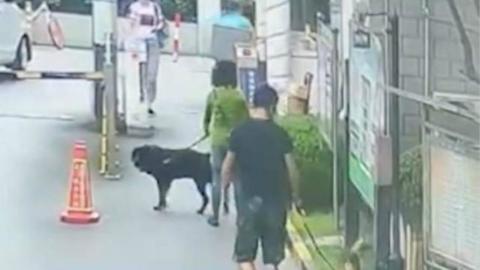 上海警方捣毁一内外勾结卖狗证团伙 但真要管好无证犬路还很长