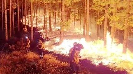 西班牙加纳利岛森林火灾肆虐 8000人被迫转移
