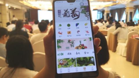 上海绿色农产品公共推介平台上线 信息名录、销售渠道、品牌故事一应俱全