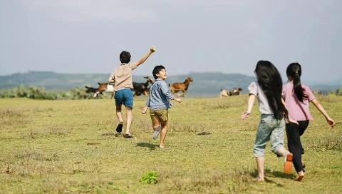 越南儿童电影《绿地黄花》