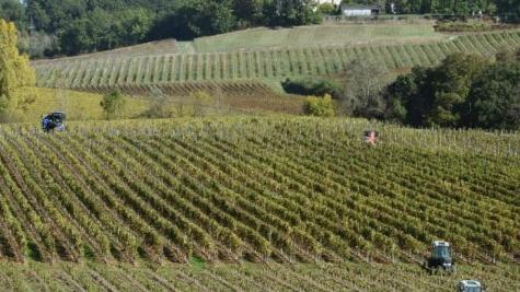 """法国正式允许开展""""观光采摘""""葡萄业务"""