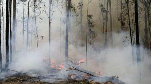 近期降雨未能明显影响澳新州林火灾情