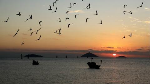 上海每年超54万只野鸟被杀!政协委员联名提议把青浦、金山、松江划为禁猎区