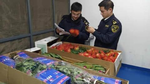 进口年宵鲜切花大幅增长 上海海关全力保障快速通关