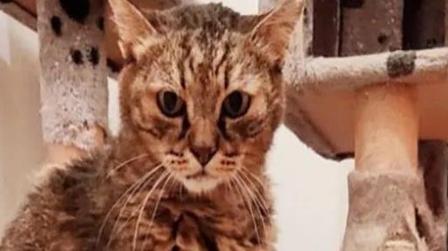 意大利一只猫迎来28岁生日 或将刷新猫科动物长寿纪录