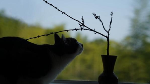 爱猫者吉明