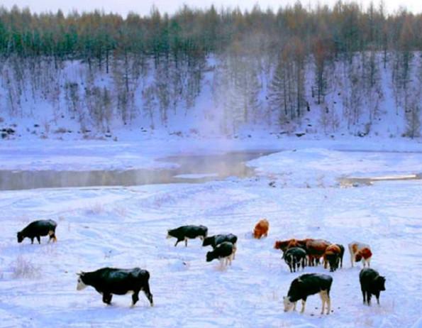 初冬,到呼伦贝尔去看雪.jpg