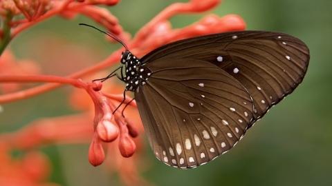 一只蝴蝶在帽檐