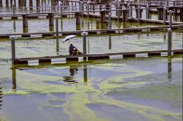華東師大科學家預測:全球二氧化碳濃度升高將加劇藍藻爆發