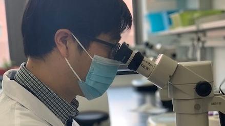 """延緩""""老糊涂""""或有新理論依據 上海科學家發現全新抗衰老靶標基因"""