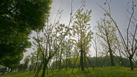 """松江""""育林军""""已到岗,今年将完成7条生态廊道建设"""