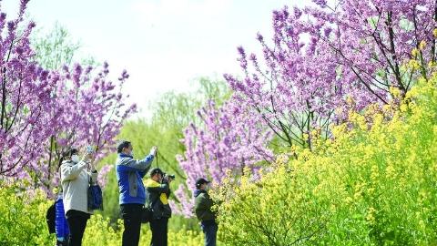 公园开放了,莫负春光莫负花