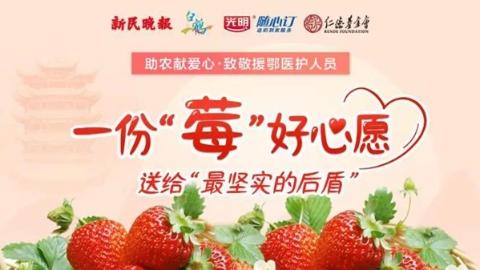 价量齐跌愁煞莓农 捐一份草莓送援鄂医护人员家庭吧