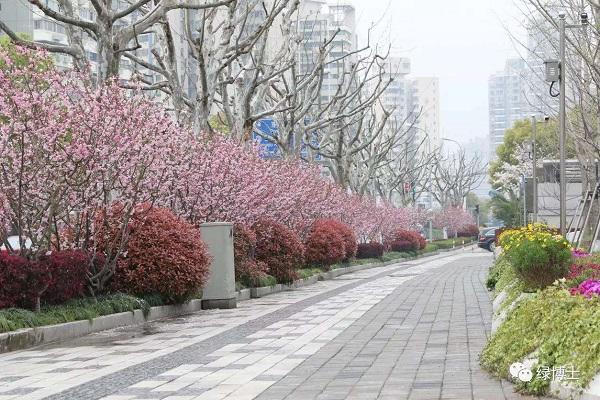 河岸绿化景观_道路绿化景观_道路景观绿化设计图