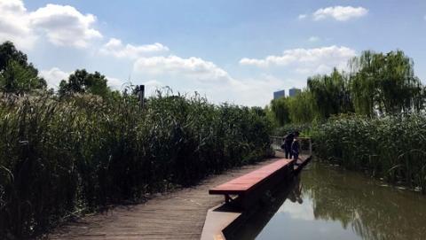 吹风漫步散心  欣赏申城滨江之美