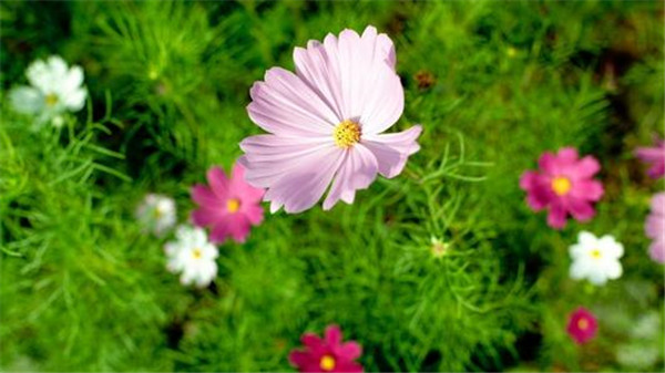 十日谈   春雨中,我在满院的杂花中醉了……