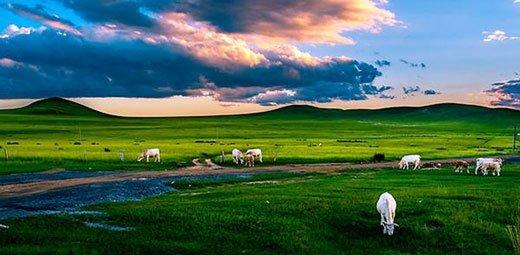 在上海早春3月的风里回味内蒙古草原的清香