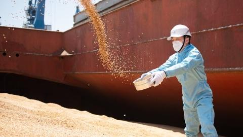 6.3万吨巴西大豆抵沪,海关关员高温下攀登豆山精准查验