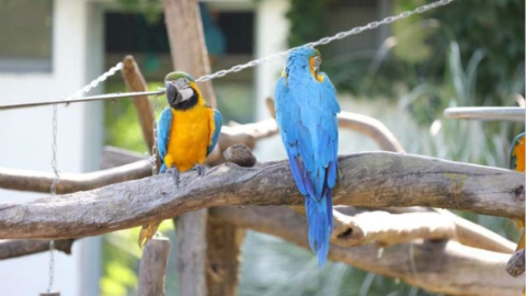 上海动物园今年已收容野生动物60种241只 它们生存现状如何?