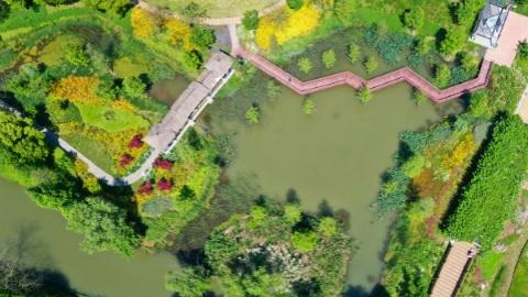 """吴根越角丨在上海这么近的地方,竟然有个""""城市里的亚马孙""""湿地"""
