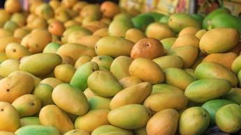 柬埔寨芒果来了!近年柬农产品出口中国势头强劲