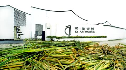 艺术家与练塘村民合作,把茭白和故事搬进美术馆