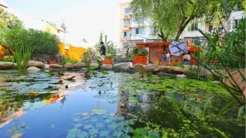 人民城市人民建,人民城市为人民 在家门口插秧、观察萤火虫……生态上海:诗意栖居地 都市田园风