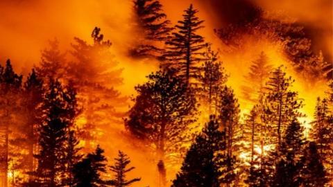 山火吞噬美国西海岸 洛杉矶面临26年来最严重的雾霾