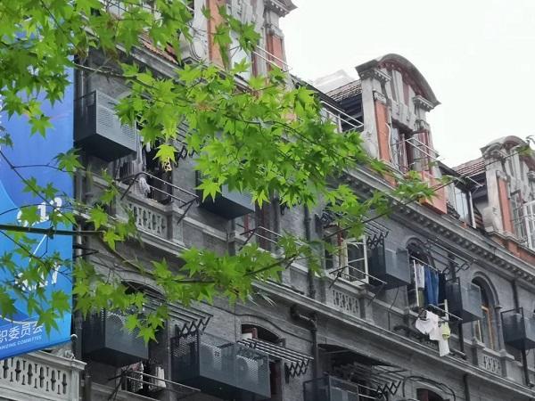 红花槭替代悬铃木成为了行道树.jpg