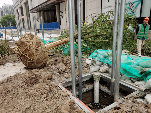 地下钢支架伸展固定于树穴周边土层内.jpg