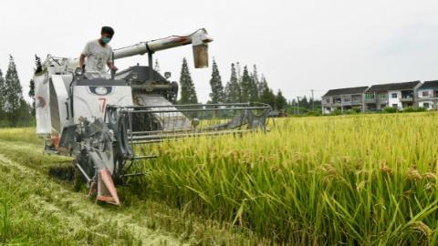 庆丰收助力乡村振兴,青浦现代农业园区第三届农民丰收节来啦!