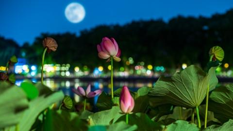 中秋明月照诗心