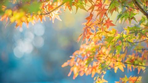 秋天的告白