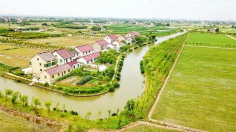 我和我的小康村|奉贤迎龙村:这个面临撤并的小村庄是如何做到逆境起飞的