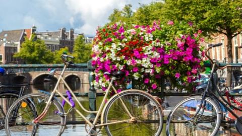 阿姆斯特丹将禁止向外国游客出售大麻