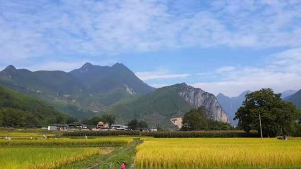 云南2020年接待游客超5.3亿人次.jpg